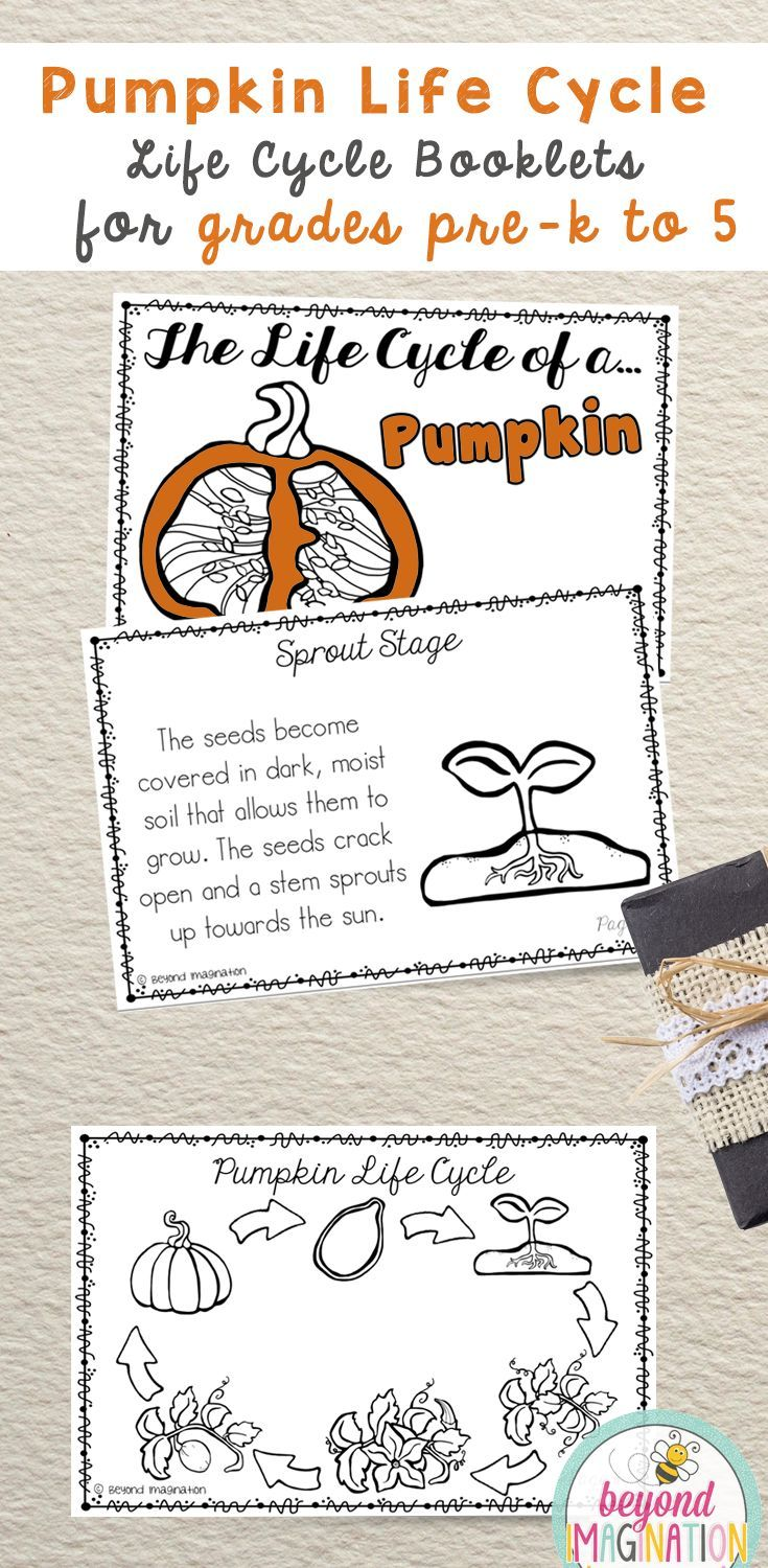 Pumpkin Life Cycle | 48 Pages for Differentiated Learning + Bonus Pages