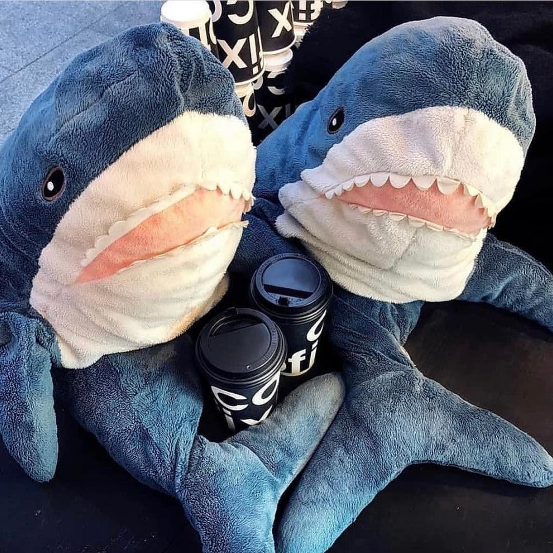 Акула из икеи любофь | Мем акула, Питбультерьер, Акула