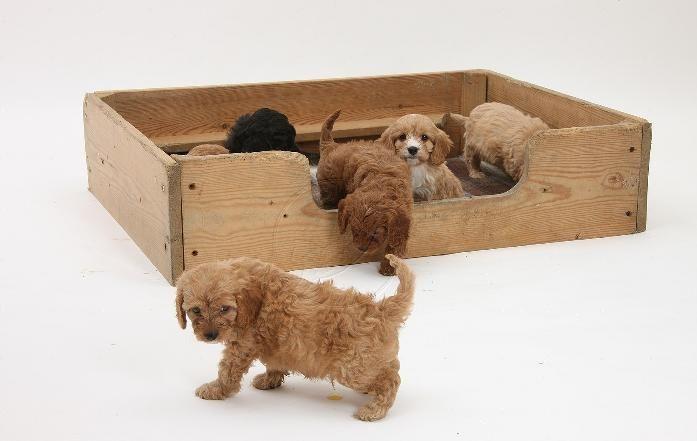 10 claves para educar a tu cachorro a hacer sus necesidades