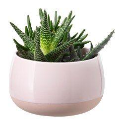 Photo of SUCCULENT Pflanze mit Übertopf – rosa – IKEA Deutschland