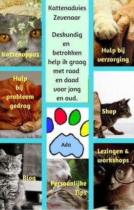 Ook Kattenadvies Zevenaar Draagt De Kinderboerderij Een Warm