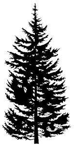 douglas fir drawing - Google Search | Ink | Tree silhouette ...
