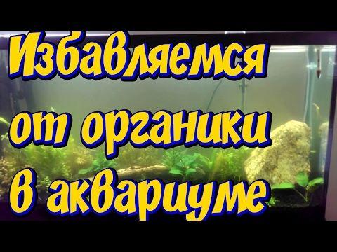 Как избавиться от мутной воды и органики в аквариуме ...
