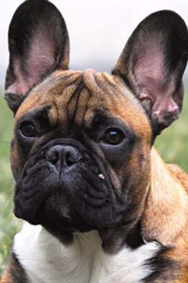 Pin On Dog Health And Care
