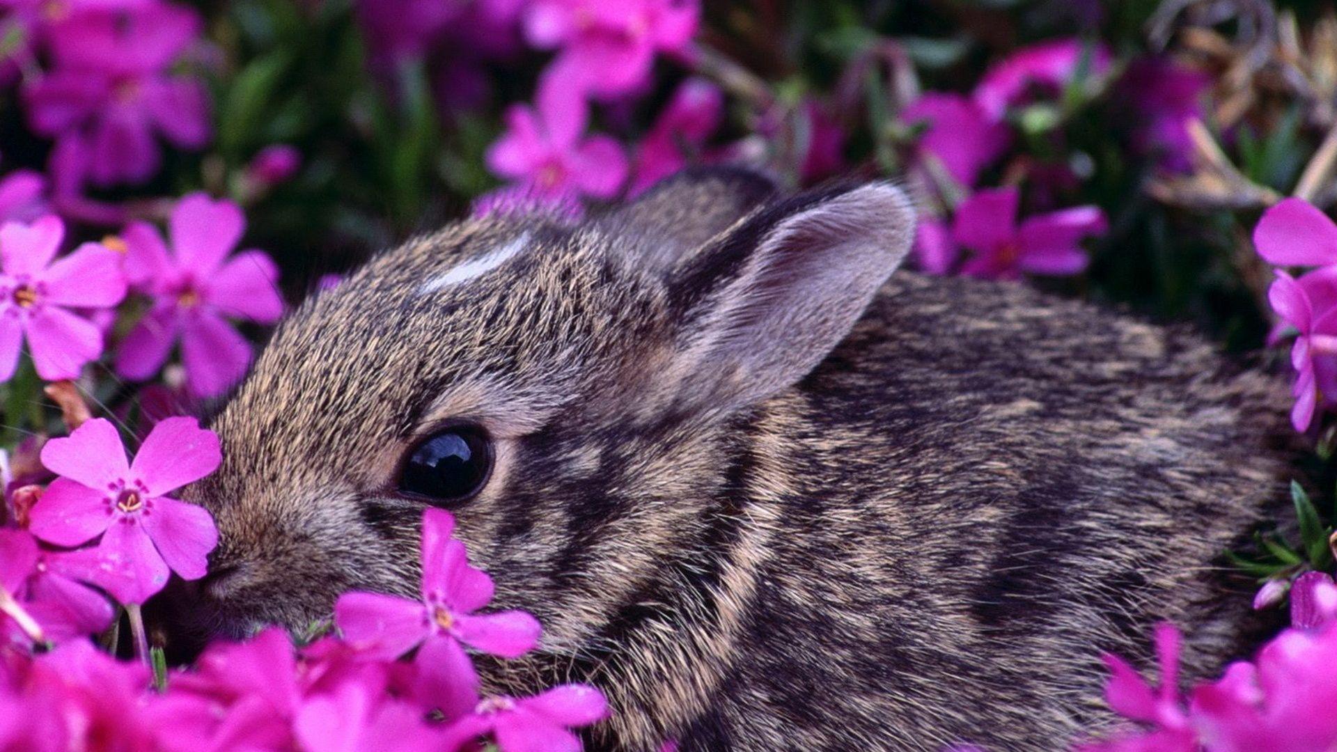 Beautiful Spring Desktop Wallpaper , animals, large