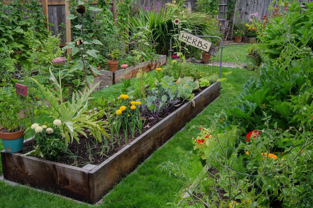 32 Raised Wooden Garden Bed Designs Examples Met Afbeeldingen