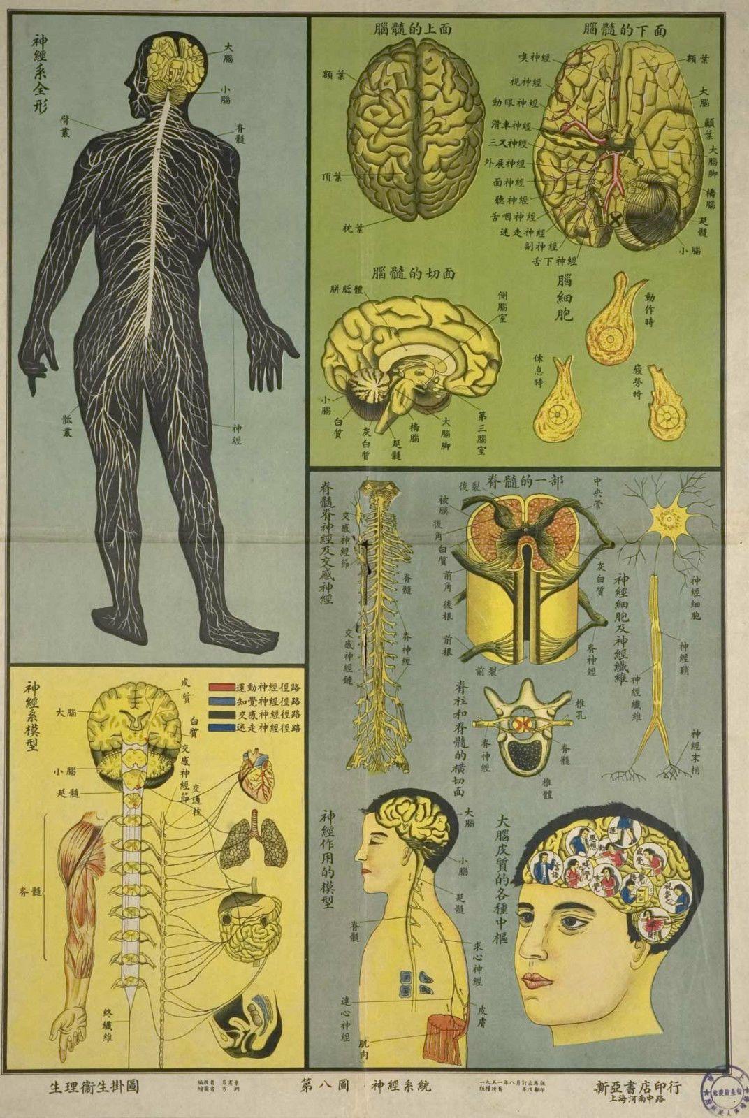 4.95 GBP - Framed Vintage Chinese Medical Print Nervous System ...