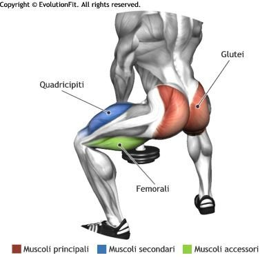Image result for sumo squats anatomy free weight.   Great workouts ...