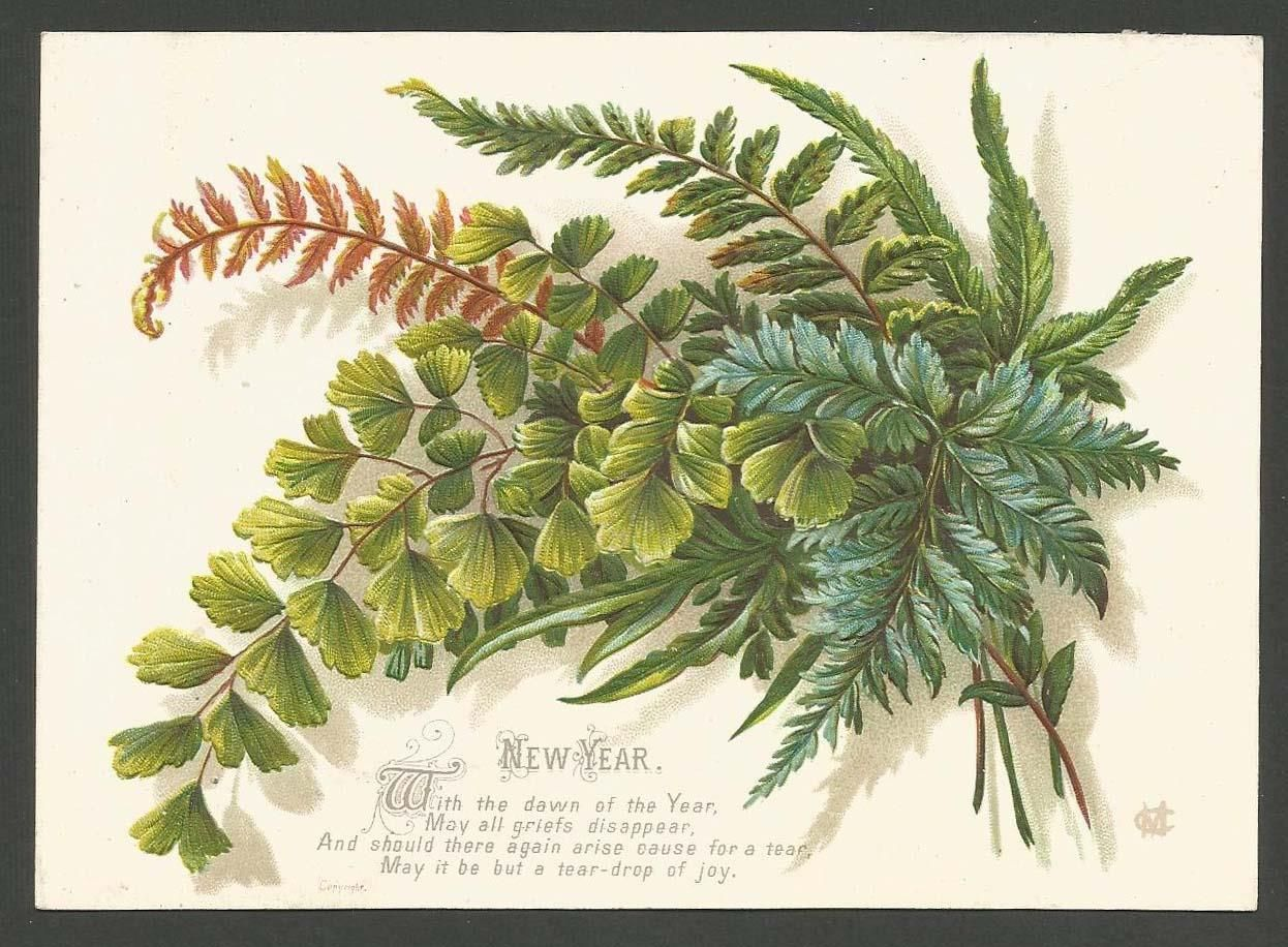 B48 Victorian Christmas Card Embossed Ferns Artist