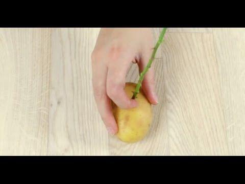 du steckst eine rose in eine kartoffel und pflanzt sie ein 2 monate s alles um den garten. Black Bedroom Furniture Sets. Home Design Ideas
