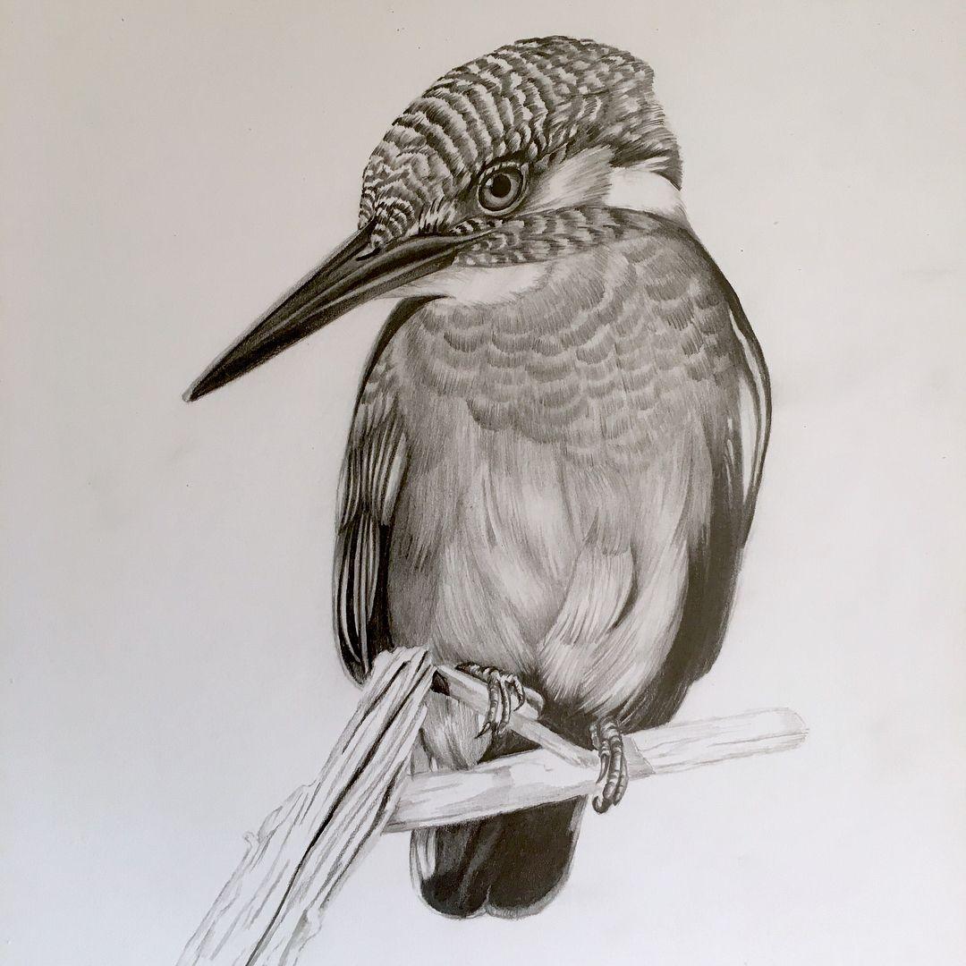 вас картинки диких птиц простым карандашом имеет традиционную