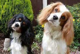 Pim Fortuin Hondjes Honden Pinterest
