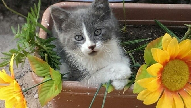 My kitty being cute!! Good thing those are fake flowers