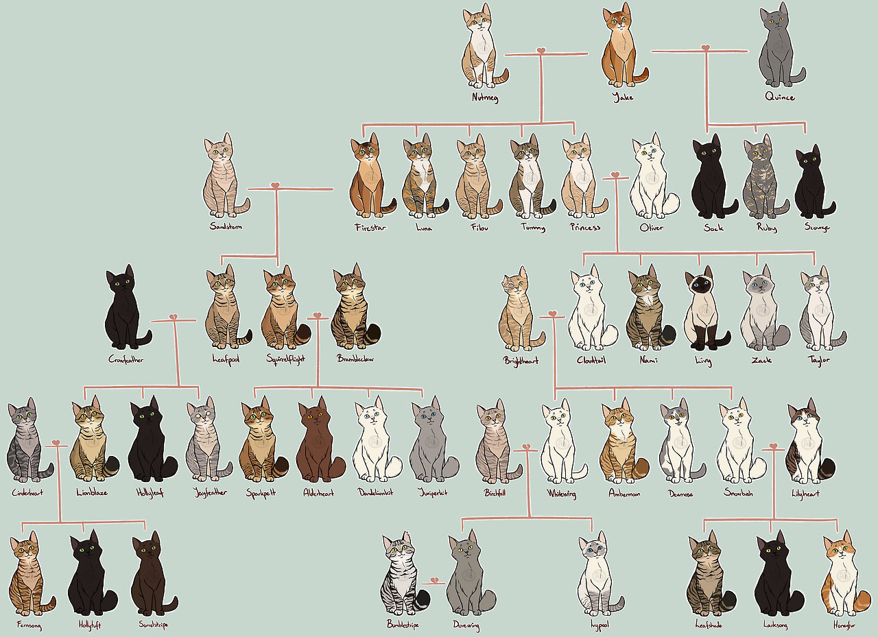 The Canon Warriors Family Tree As Of Shattered Sky Firestar's Family Tree  As Of Shattered