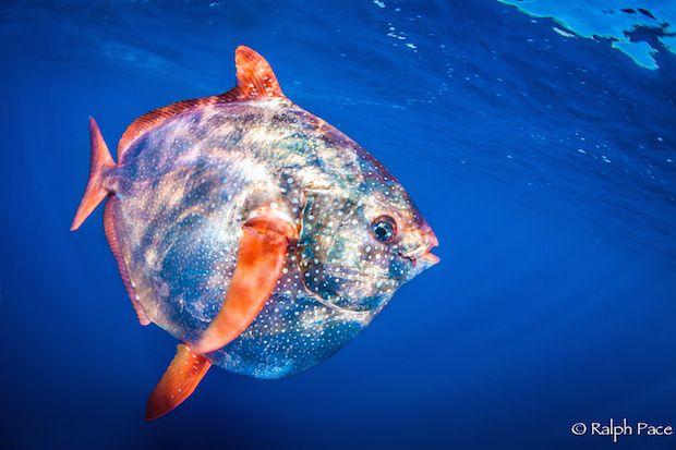 Adventure Sports Network The Gateway To Adventure Sports Ocean Fishing Fish Salt Water Fishing