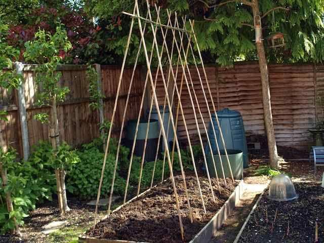 How To Grow Climbing Peas Beans Bean Garden Vertical Vegetable Garden Home Vegetable Garden