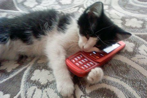 Cat on the Phone Big Boss | Funny cat photos, Funny cat pictures, Funny cats