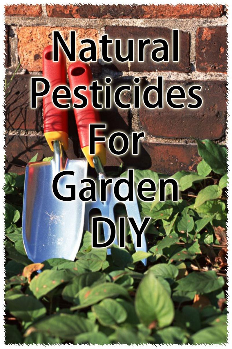 Diy Organic Pest Control For Gardens