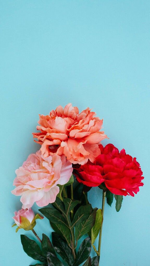 Iphone 7 Plus Wallpaper Wallpaper Pinterest Flowers Bloom And