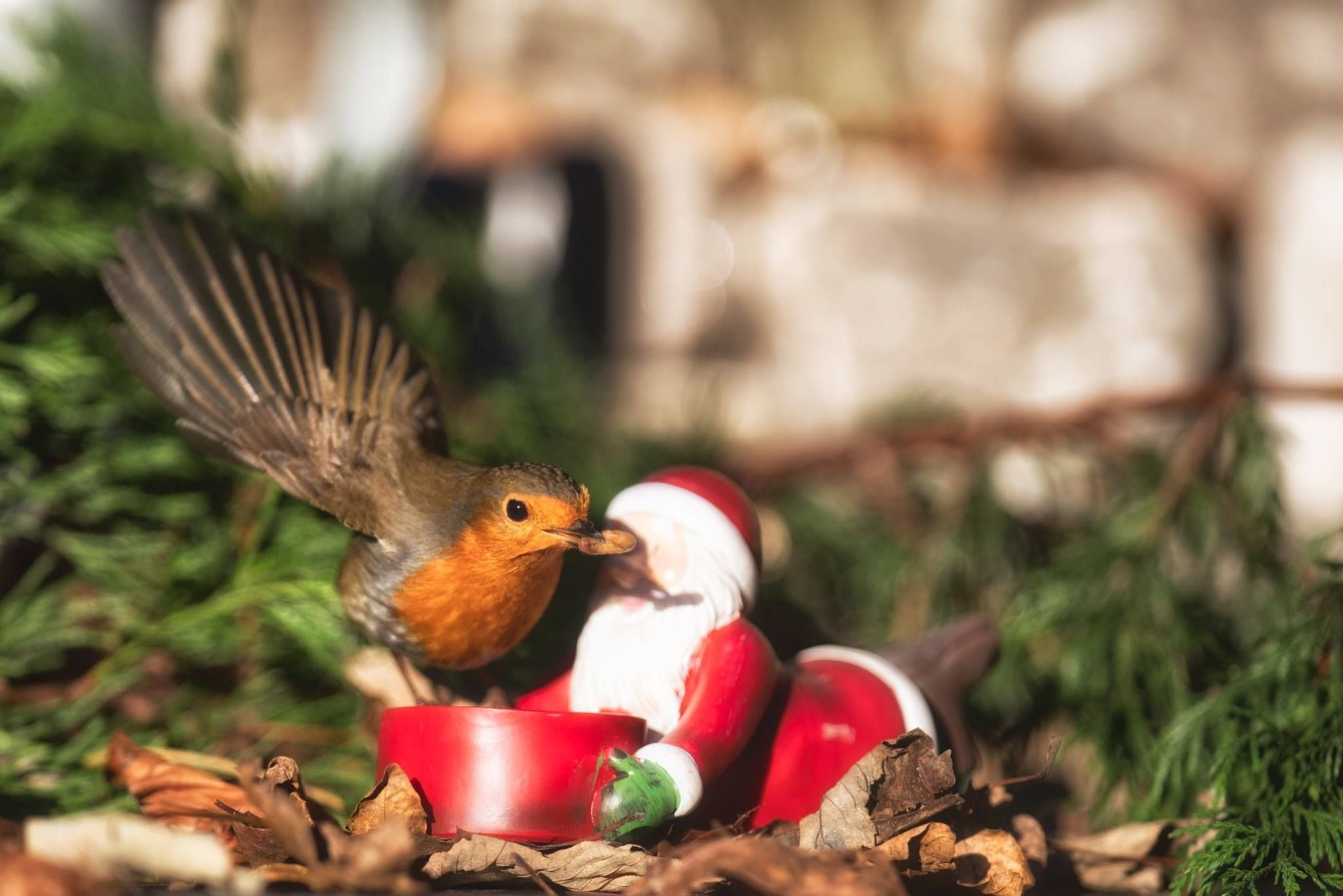 Be Santa for all your garden birds this month they need feeding in ...