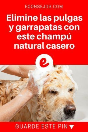 Elimine Las Pulgas Y Garrapatas Con Este Champú Natural Casero Pulgas Y Garrapatas Champú Para Perros Casero Champú Para Perros