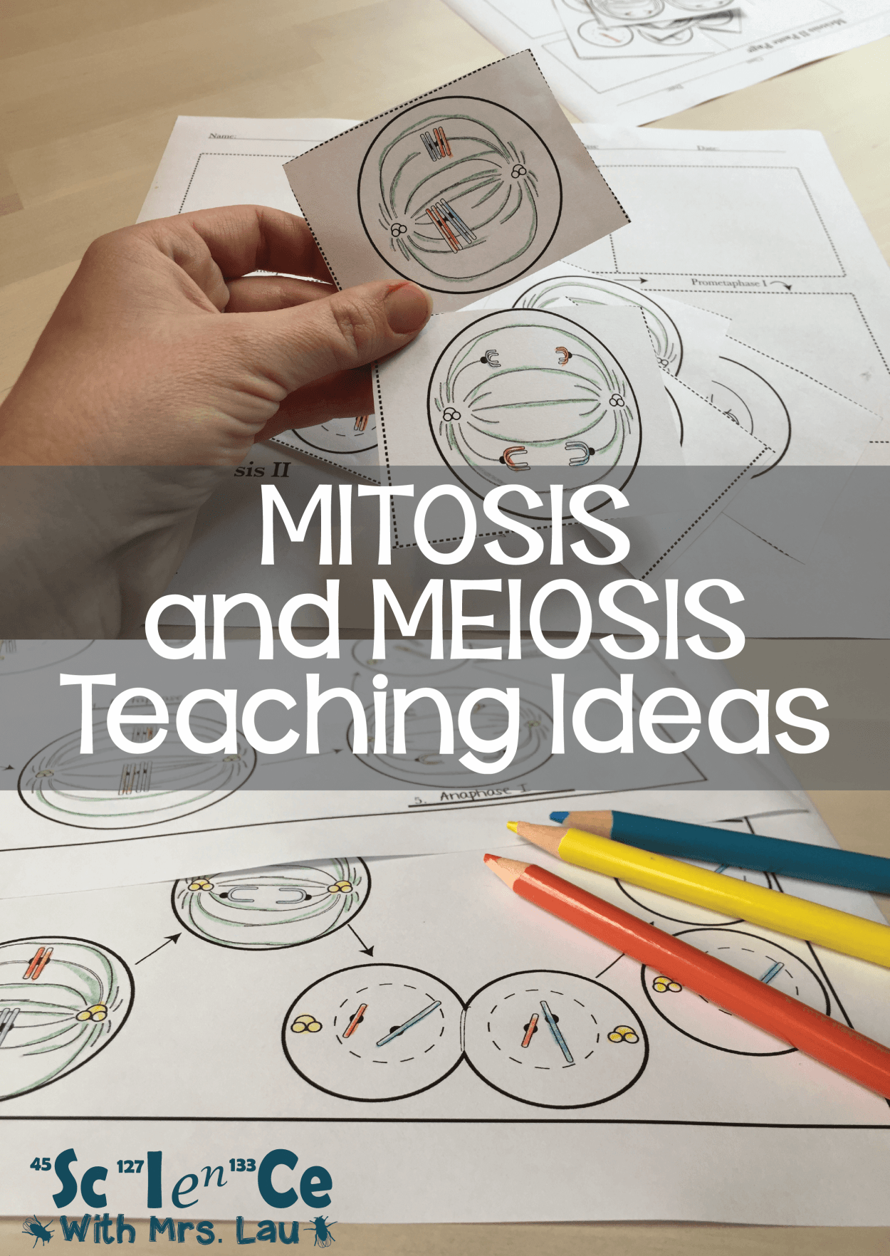 Meiosis And Mitosis Teaching Ideas Blog By Science With