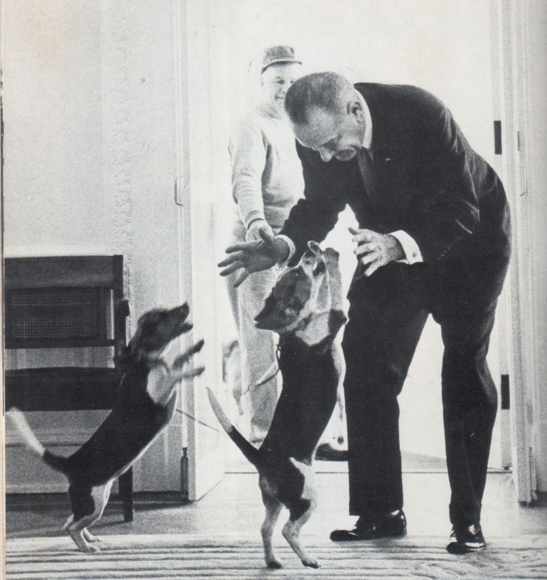 Lbj S Beagle Run Over And Killed In White House Driveway Beagle