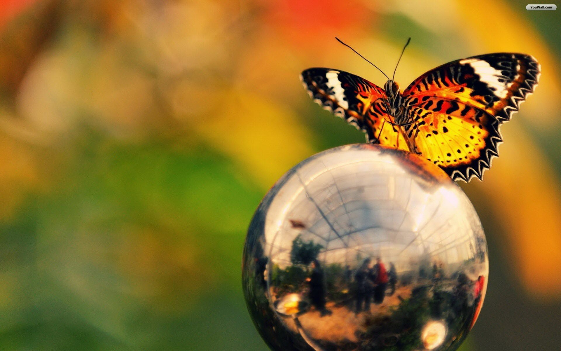 Hdooh Com Butterfly Wallpaper Wallpaper Globe Wallpaper
