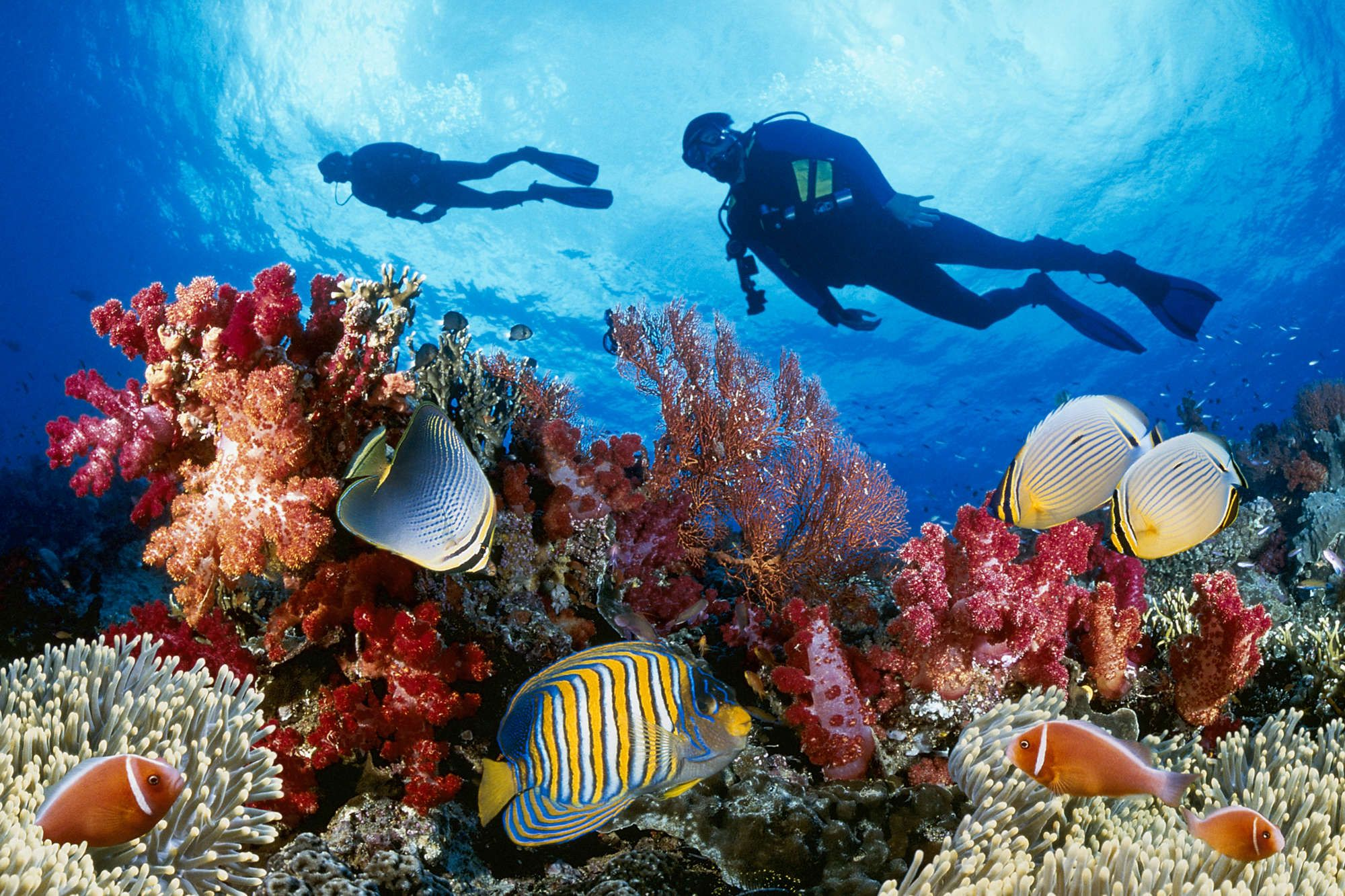 The Best Places Around The World To Scuba Dive Great Barrier Reef Phu Quoc Diving