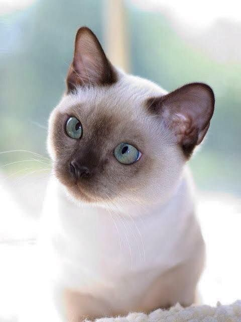 Pin By Rita On Cats Paws And Whiskers Pretty Cats Cute Cats Beautiful Cats