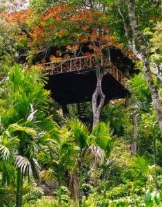 spend a week in a treehouse <3
