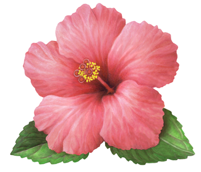 Hibiscus Flower Illustration In 2020 Pretty Flowers Pictures Flower Painting Flower Phone Wallpaper
