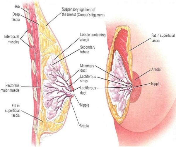 How To Tell If You Have Breast Cancer   Http://www.howgetrid