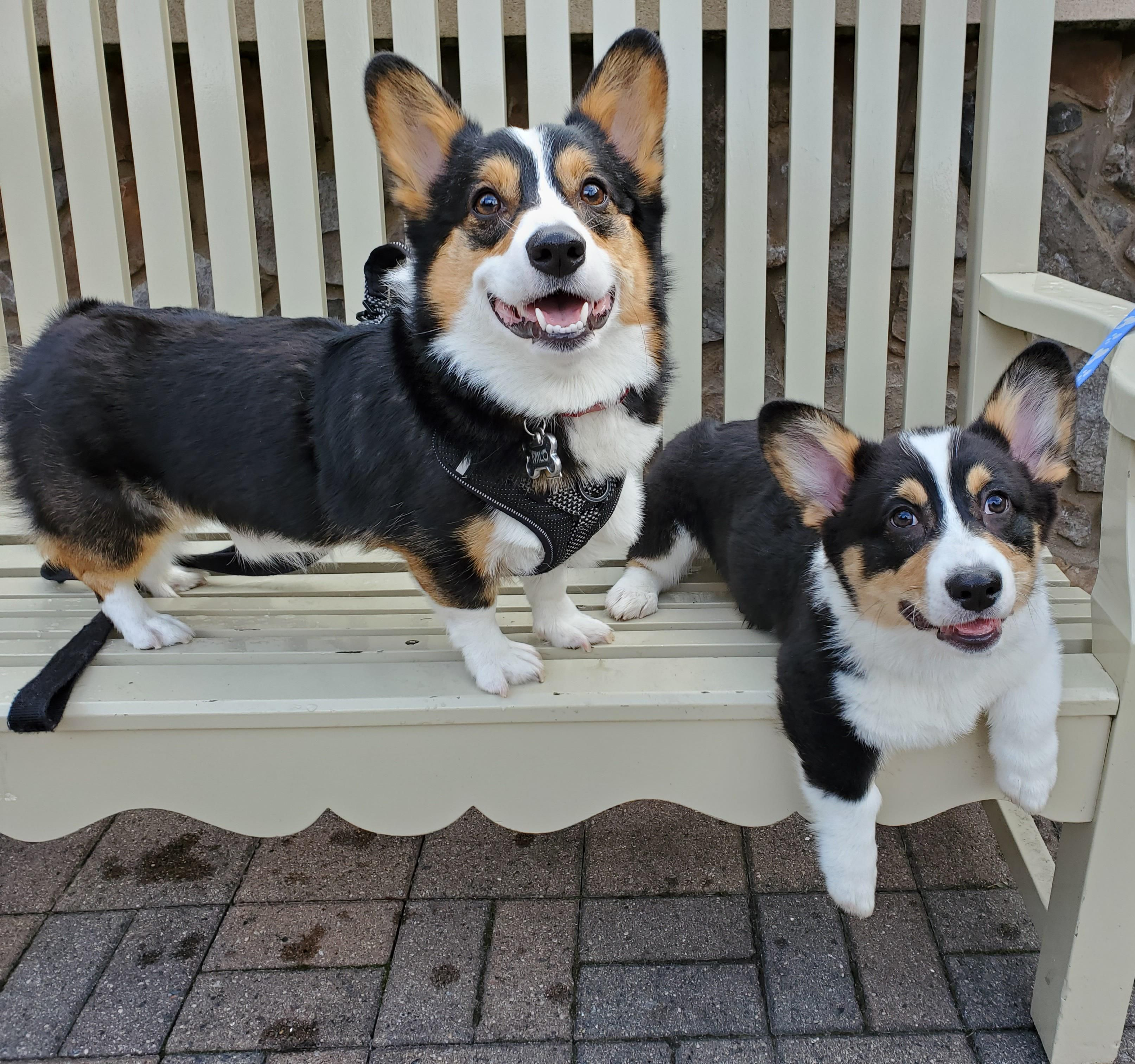 My two happy boys on a park bench 😃😃