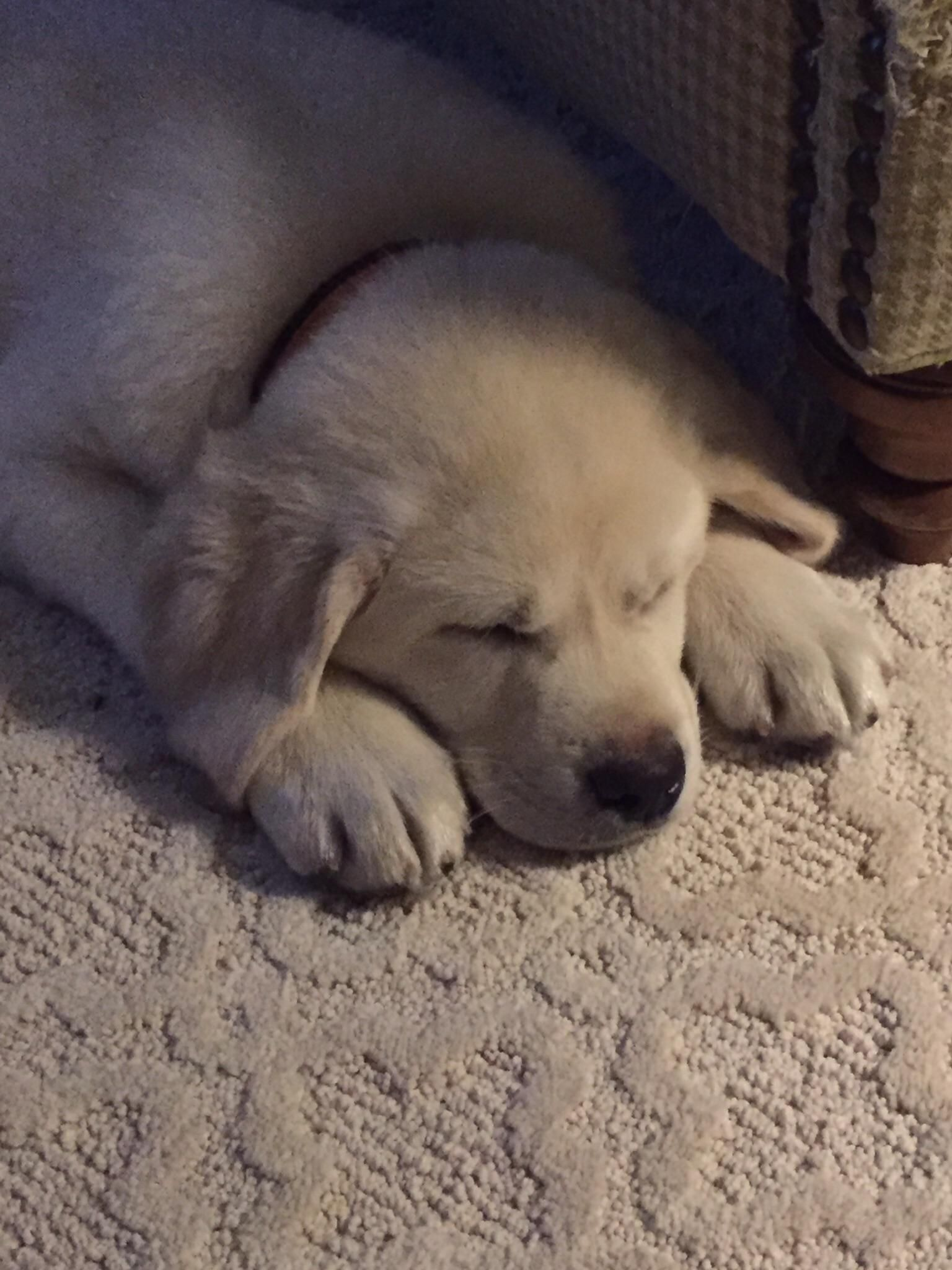 Throwback to when my dog was a sleepy little puppy ift