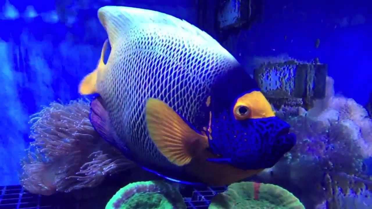 Earth And World 2020 Popular Magazine Angel Fish Fish Pet Beautiful Fish