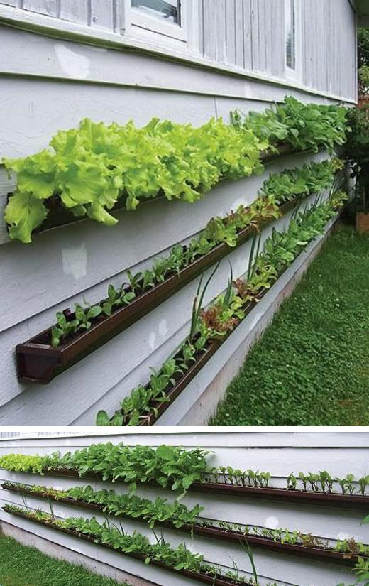 Fence gutters for leafy vegetables wonder how it drains for Rain gutter planter box