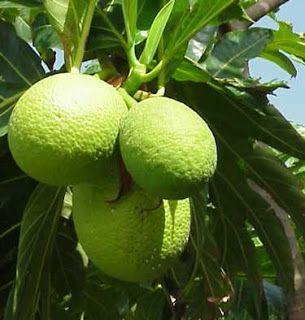 Pin On Fruit Tree