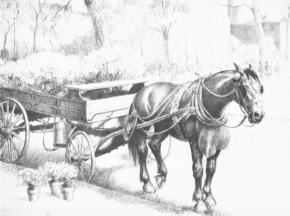 Horse Art Vintage Horse Illustration By Equestrian Artist Cw