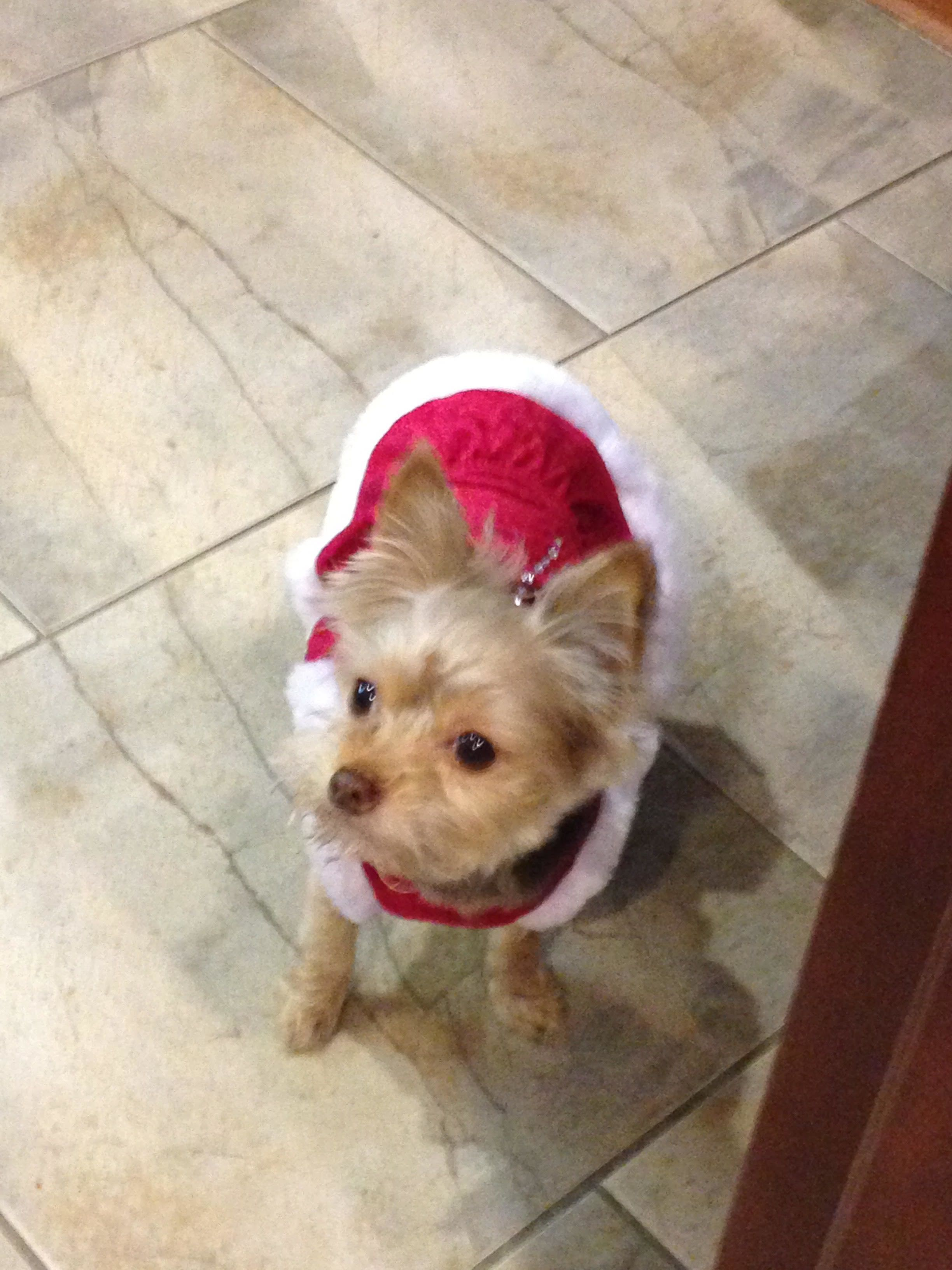 Adopt Mia on Pet adoption, Pets, Chihuahua mix
