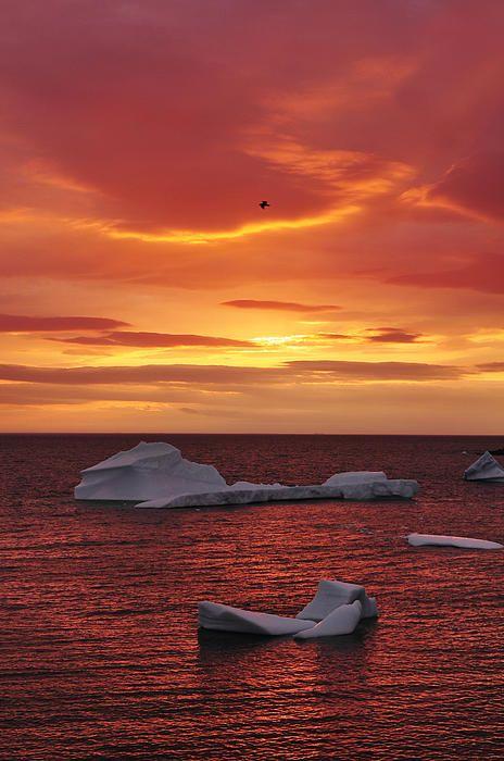 ☀Icebergs At Sunset by Christian Heeb ~ Newfoundland Canada*
