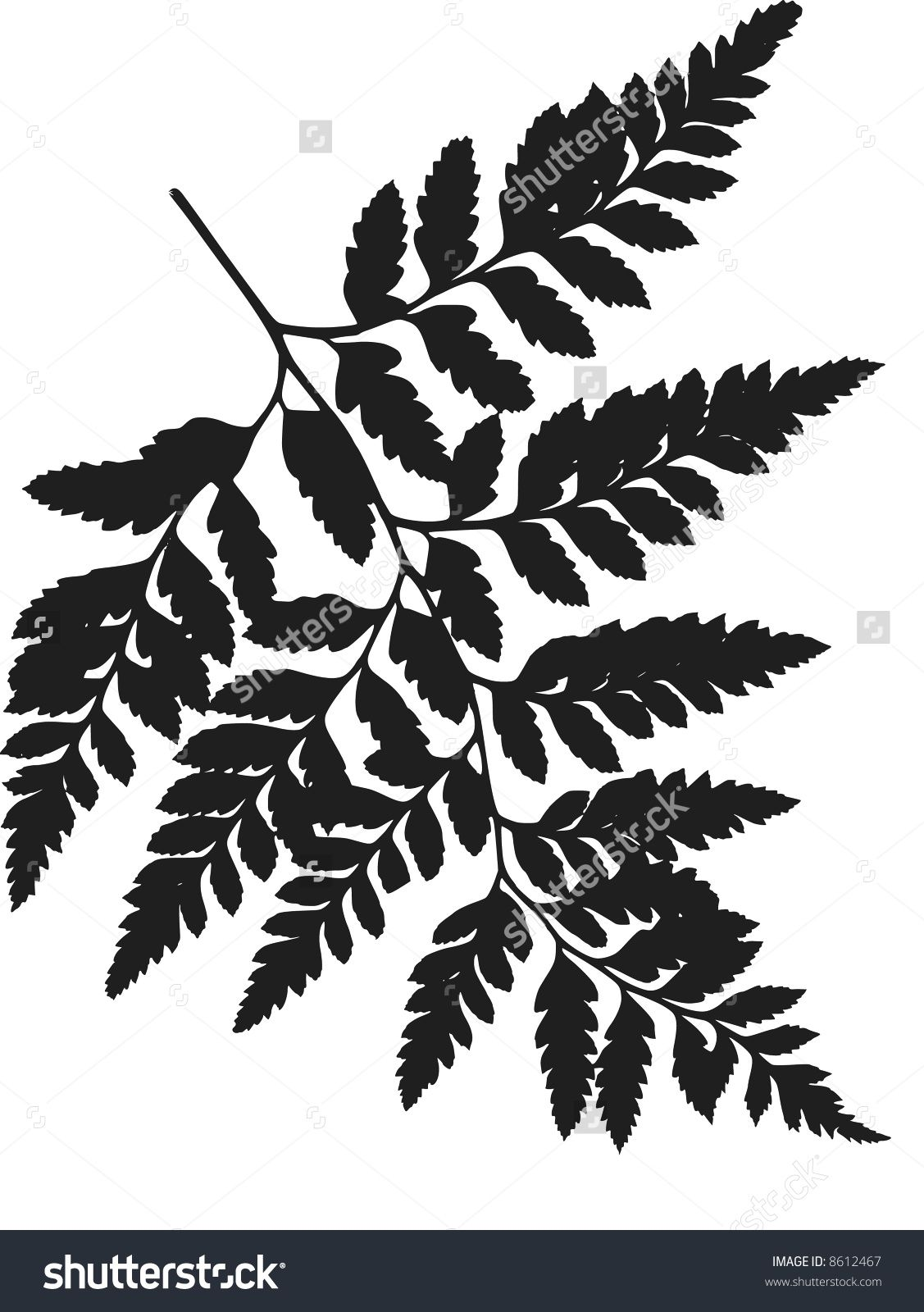 Image Fiddlehead Fern Stock Photos Images Pictures Shutterstock Dessin Feuille Fougere Dessin