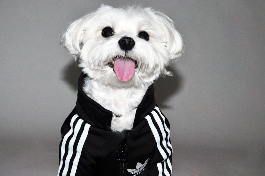 Adidas Doggie Tracksuit Omg Puppies Dog Pounds Pets Rock