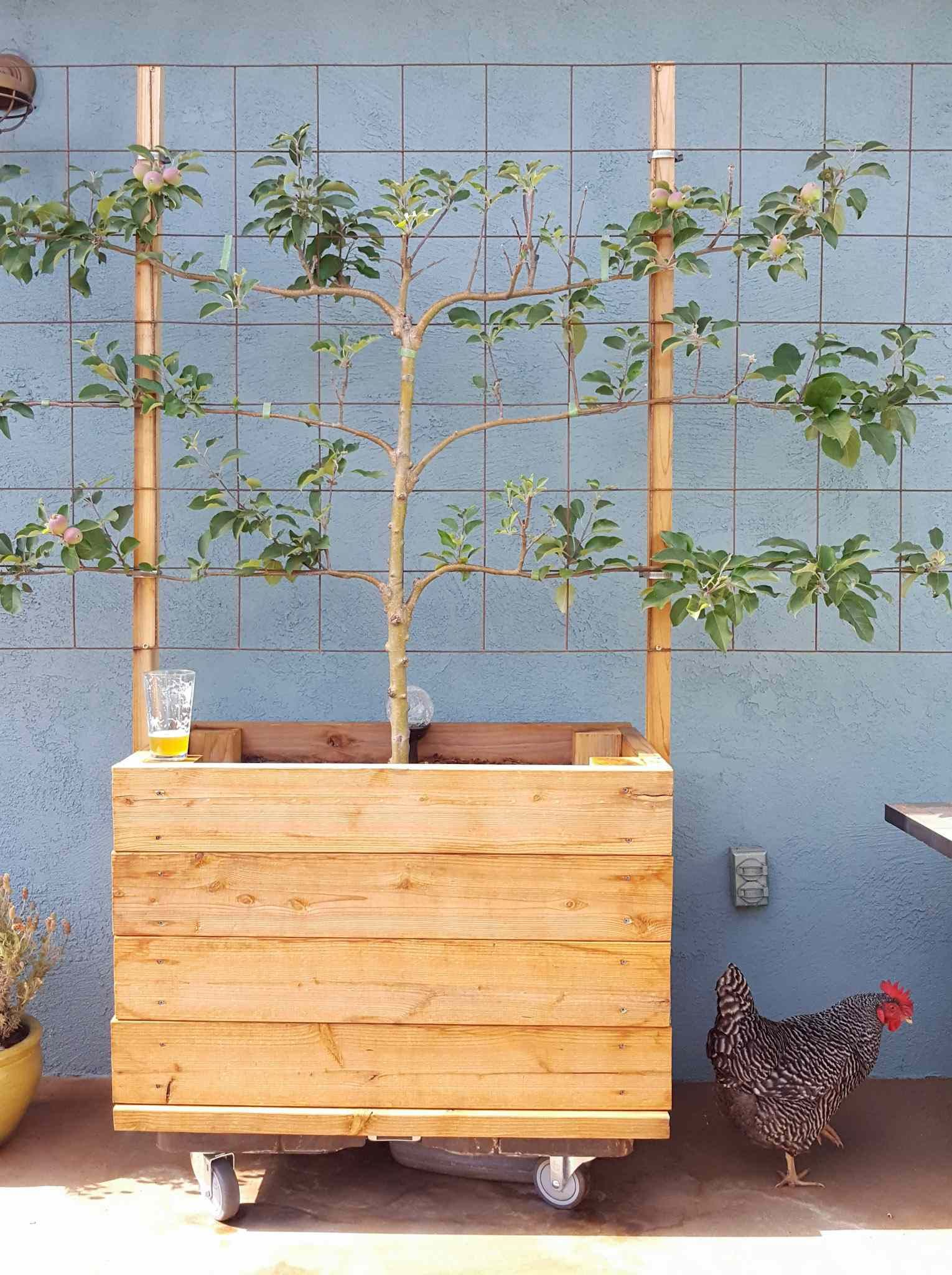 How to Build a Raised Garden Bed on Concrete, Patio, or