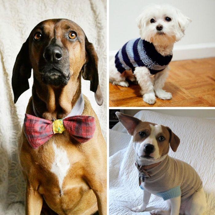 Hundebekleidung selber machen - ein Schutz vor Kälte und Wind | Luna ...