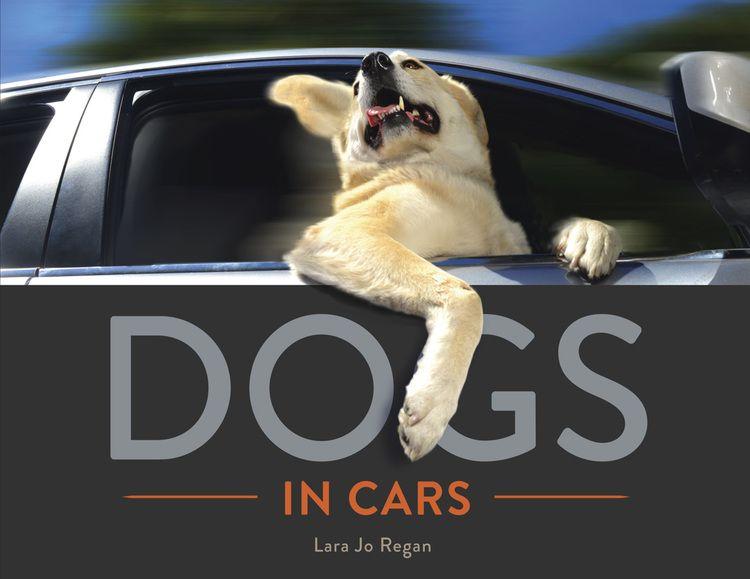 Dogs In Cars By Lara Jo Regan