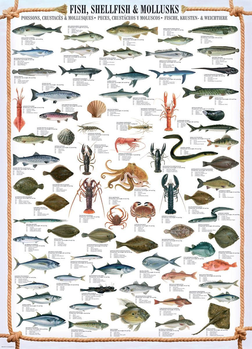 Shell fish posters pinterest fish shell and saltwater fishing for Saltwater fish names