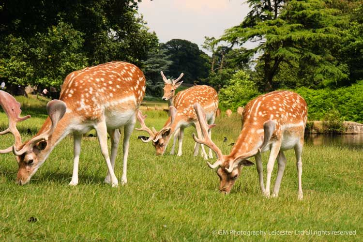 Nature Photography | GM Photography Leicester