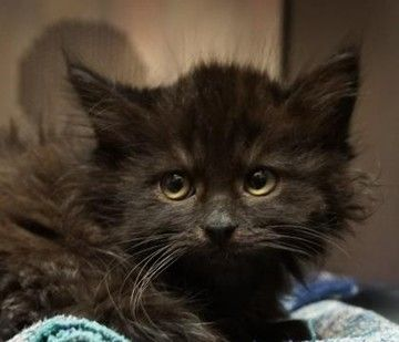 Check Out Yang S Profile On Allpaws Com And Help Him Get Adopted Yang Is An Adorable Cat That Needs A New Home Https Www Allpaw Cat Adoption Cats Cute Cats