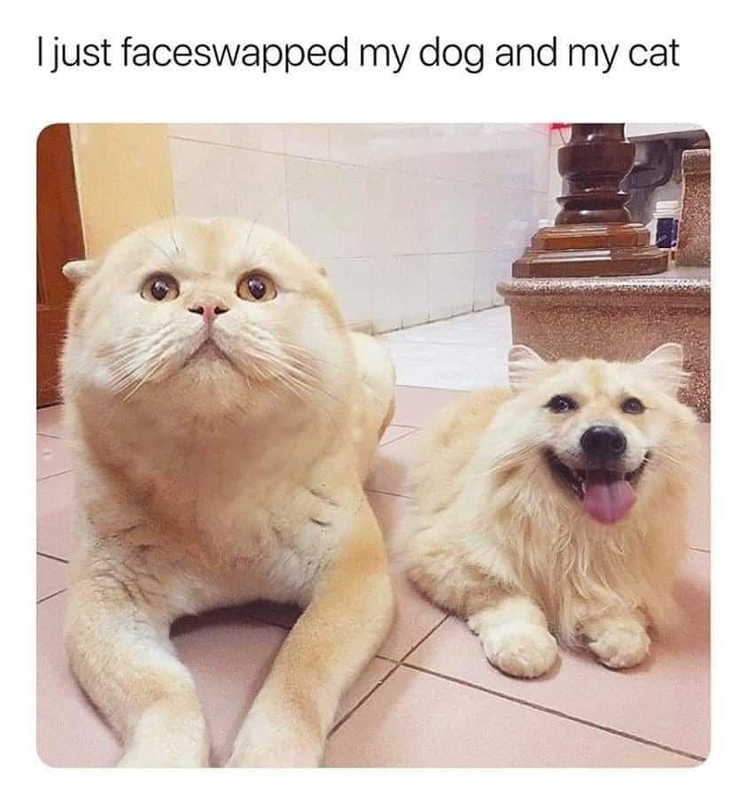 Cat Meme In 2020 Funny Animal Memes Funny Animals Funny Animal Jokes